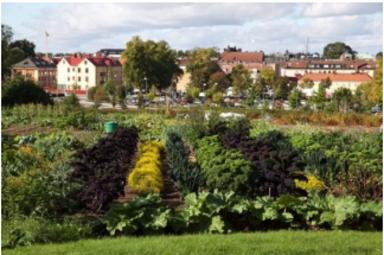 Växjö kommuns stadsodling Ekobacken. Foto: Peter Svensson