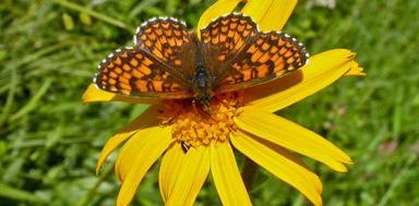 Bild: Naturskyddsföreningen