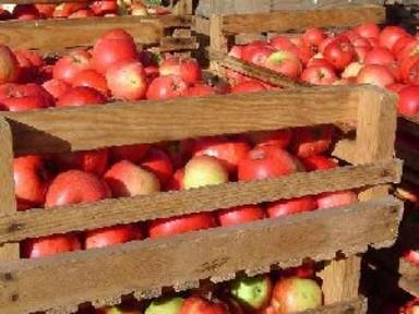 Gör must av dina äpplen – Mustning av äpplen på Stallarholmens Musteri - stora som små mängder