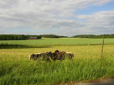 Väg mellan Skå och Svartsjö. Foto: Per Ola Wiberg. CC BY.