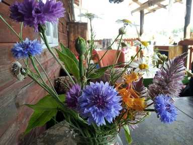 Blommor på Rosenhill. Foto: Stefan Pettersson CC (BY-SA)