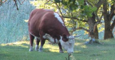 Naturskyddsföreningen Strängnäs