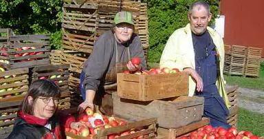 Gör must av dina äpplen – Gör äppelmust av dina äpplen hos Stallarholmens Musteri