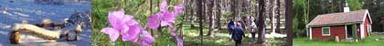 Naturskyddsföreningen i Sollentuna